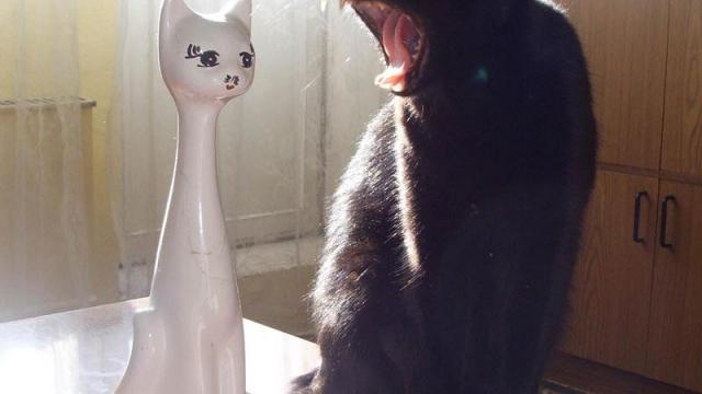Лучшие приколы с котами! №3.5 Catapocalypce Coub №3.5