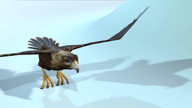 golden eagle -3D Model