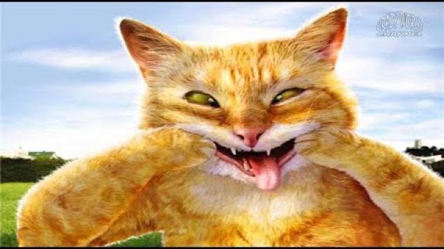 СМЕШНЫЕ КОТЫ И КОШКИ 2017 ПРИКОЛЫ С КОТАМИ И КОШКАМИ 2017 FUNNY CATS Compilation 2017 #63