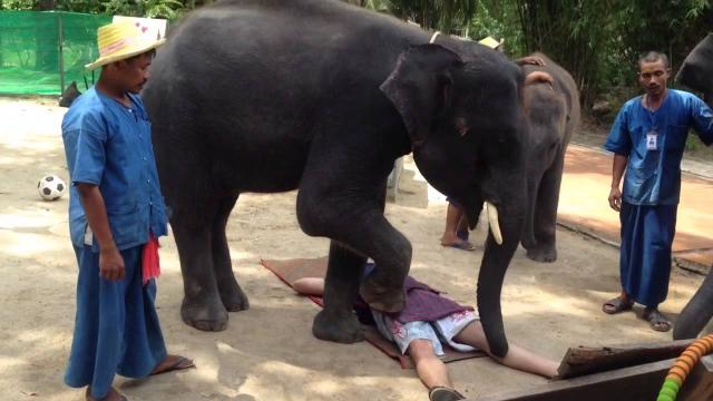 Слон-садист