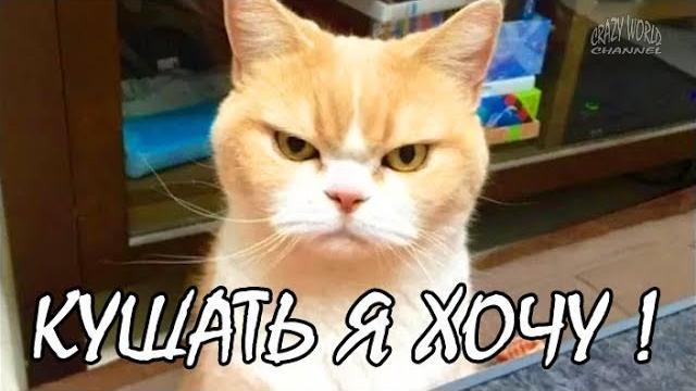 Смешные Коты и Кошки 2017 Приколы с Котами и Кошками 2017 Лучшие Приколы с Котами #9