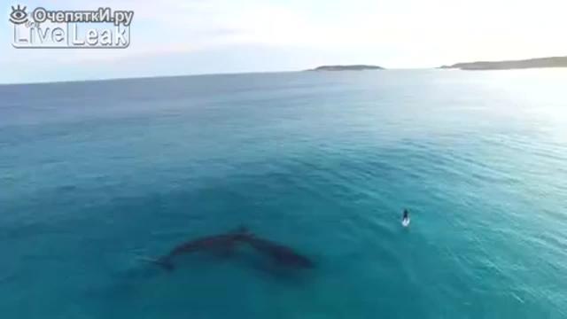 Красивое видео с китами