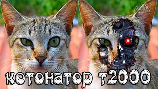Смешные Коты и Кошки 2018 Приколы с Котами и Кошками 2018 Лучшие Приколы с Животными #30
