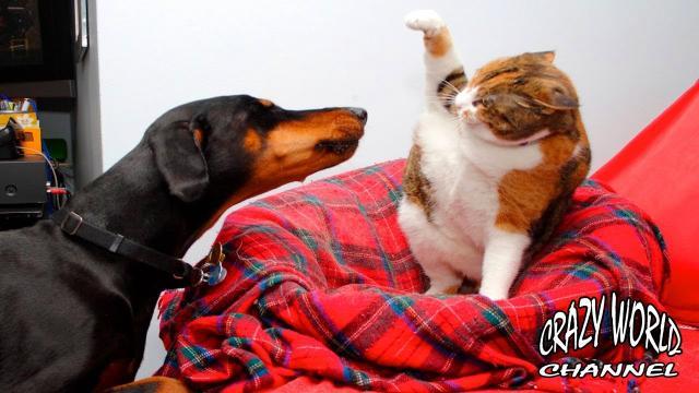 СМЕШНЫЕ КОТЫ И КОШКИ 2017 ПРИКОЛЫ С КОТАМИ И КОШКАМИ 2017 FUNNY CATS Compilation 2017 #50