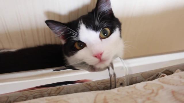 Один день из жизни Кота!