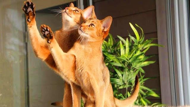 ПРИКОЛЫ С КОТАМИ И КОШКАМИ 2017 СМЕШНЫЕ КОТЫ И КОШКИ 2017 FUNNY CATS Compilation 2017 #51